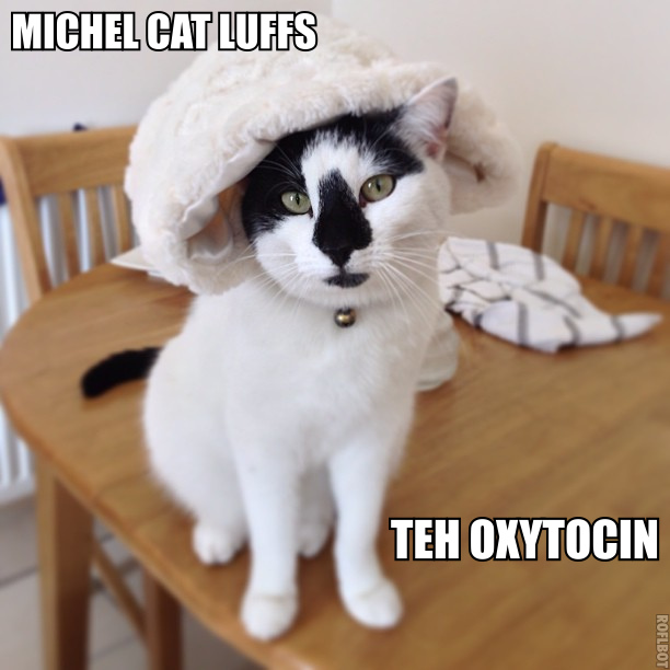 Michel Cat Luffs Teh Oxytocin